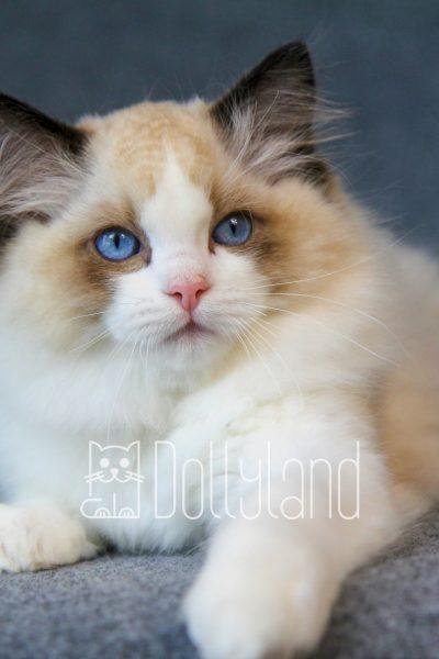 dollyland_lilibeth
