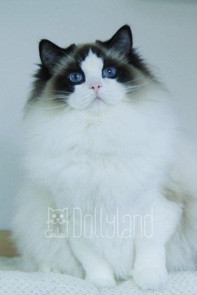 _dollyland_lilibeth